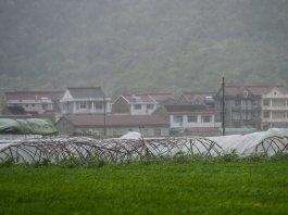 Photo taken on July 11, 2015 shows greenhouses broken by heavy wind in Sanmen County of east China's Zhejiang Province. The approaching Typhoon Chan-Hom has brought gales and rainstorms to Zhejiang Province, east China, forcing hundreds of flights to be canceled and highways to be closed, local authorities said Saturday. (Xinhua/Xu Yu) (zwx)