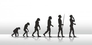 Evolution of modern humans