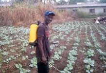Mr Stephen Kwaku Agyei