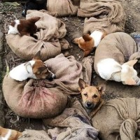 Dog meat is banned in Nagaland, India
