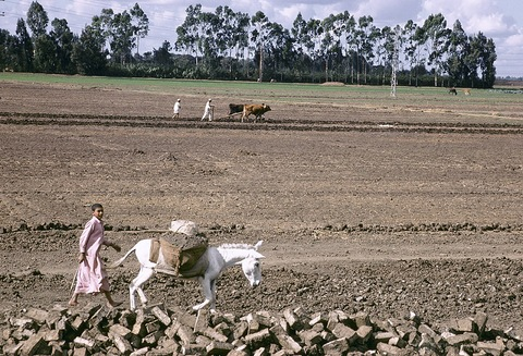 Farmers in Egypt. Photo by Ray Witlin/World Bank