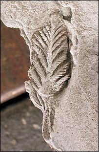 Ediacaran fossil, Science