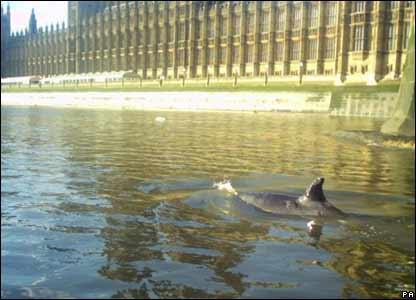 Whale swims past Parliament Buildings
