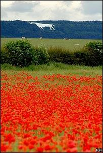 A poppy field below the White Horse at Kilburn near Thirsk