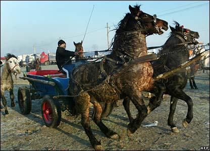 A horse-seller drives a cart at an animal fair in Romania