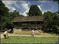 Cultivadores de coca en Bolivia