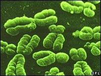 Cada célula humana generalmente tiene 23 pares de cromosomas.