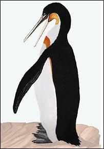 Impresión de un artista del pingüino Icadyptes salasi