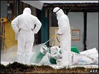 Trabajadores con mascarillas para protegerse del virus de la gripe aviar