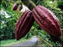 El cacao natural tiene un sabor amargo.