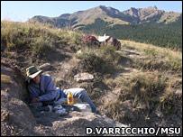 Los cient�ficos encontraron los restos del dinosaurio en una guarida.