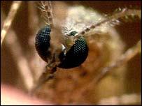 La temperatura es un factor clave en el crecimiento y propagación de mosquitos.