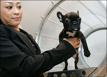 A dog undergoes oxygen therapy at Air Press salon in Tokyo