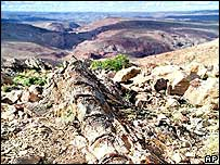 A dinosaur backbone sticks out of ground in Patagonia (AP)