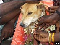 The dog who got married