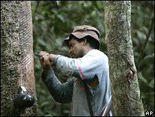 Harvesting rubber at a plantation in Xapuri