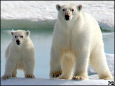 Polar bears (file picture)