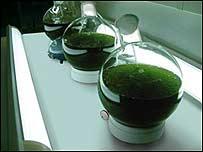 Tubos que contienen algas preparadas para crear