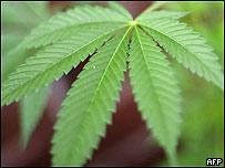 Planta obtenida mediante ensayos genéticos