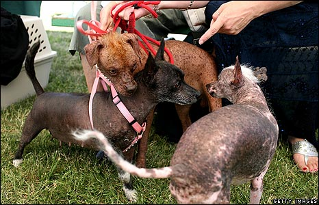 Three dogs mingle before the start of the competition