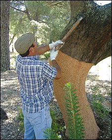 Stripping bark from Portugal's cork trees