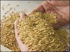 Rice. File photo.
