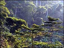 Rainforest in Kakum National Park, Ghana