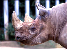 Rhinoceros (file image)