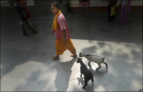 Indian priest leading goats into temple