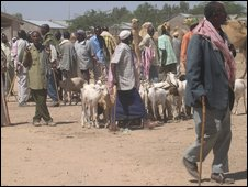 group of people and goats