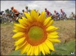Penal Tour de France pedals off