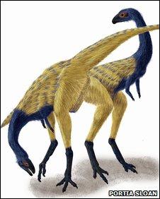 Limusarus fossil (Portia Sloan)