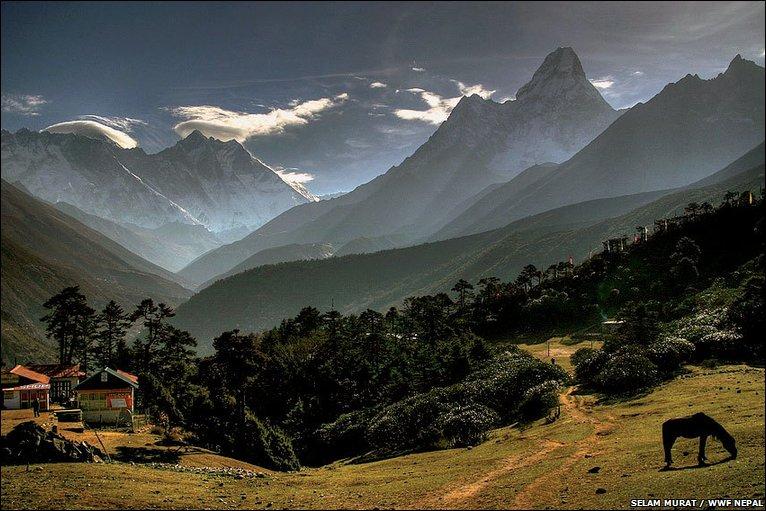 Himalayan treasures threatened