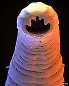 Hook Worm