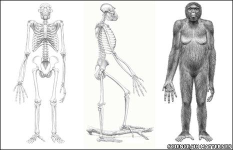 Ardipithecus artist's conception (Science)