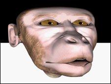 Synthetic macaque, A Ghazanfar