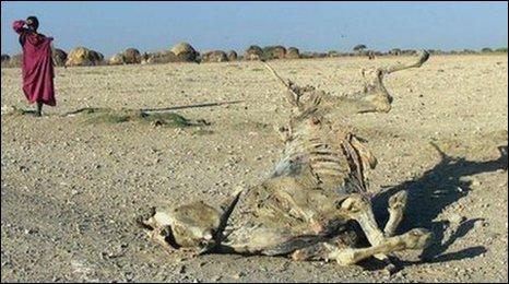 cattle carcas on drought landscape