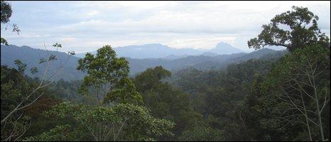 The Borneo jungle