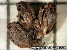 Bronze Age flowers found in a grave at Forteviot, Perth, Scotland