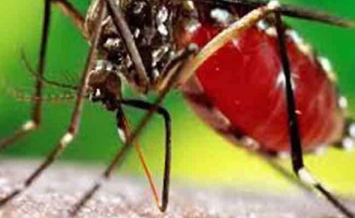 उत्तराखंड में जीका वायरस को लेकर एलर्ट, नौ और मरीजों में डेंगू की पुष्टि