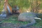 हरिद्वार में हाथियों की मौत के मामले की जांच के आदेश दिए