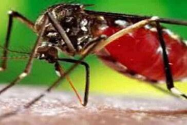 डोईवाला में डेंगू से एक युवक की मौत,सीएम के विधानसभा क्षेत्र में भी डेंगू का कहर