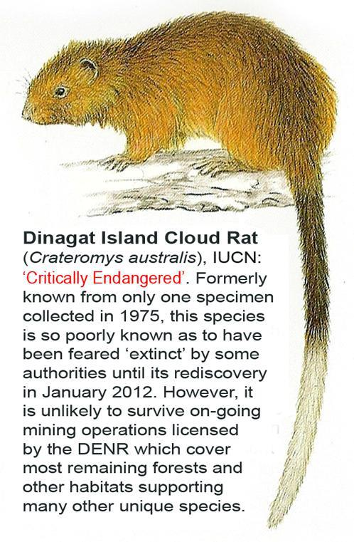 Dinagat bushy-tailed cloud rat