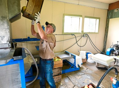 Aaron Sturges, owner of Sturges Orchards, place apples into an apple pressing machine at his farm Monday Aug. 27, 2018, in Fombell, Beaver County. (Nate Guidry/Post-Gazette)