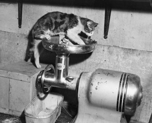 A cat crawling across a meat grinder was a clear violation.