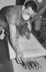 June 22, 1967: William Flynn selects smelt, left, and feeds porpoise.