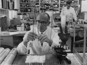 Feb. 13, 1966: Salk in the lab. (Credit: The Pittsburgh Press)