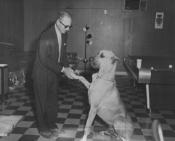 June 14, 1964: How does this relate to moonshine? Brady, a friendly Great Dane was to watch out for revenue agents. Instead, she greeted agent Harold Silber with a pawshake. (The Pittsburgh Press)