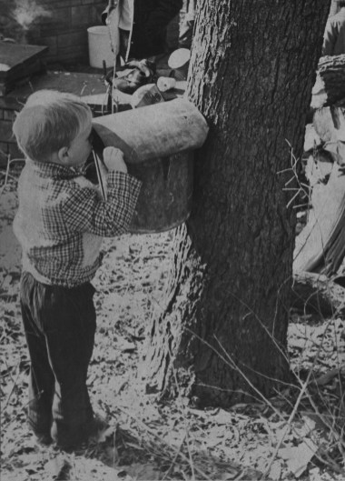 A rather curious three year-old Mathew Bradley peeks into a sap collector during a demonstration in 1975. (Albert M. Herrmann/The Pittsburgh Press)