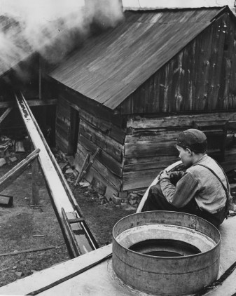 An image of processing maple sap into syrup from 1937.